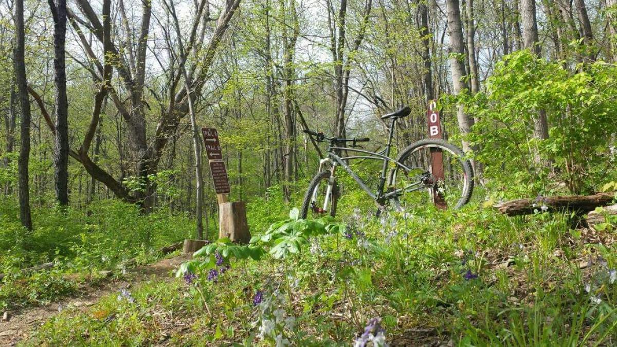 Mitchell Memorial Forest Mountain Bike Trail