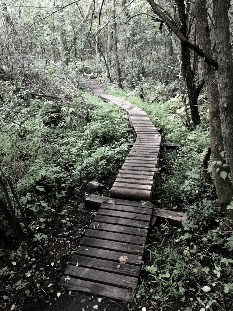 Bertram Chain of Lakes Trail