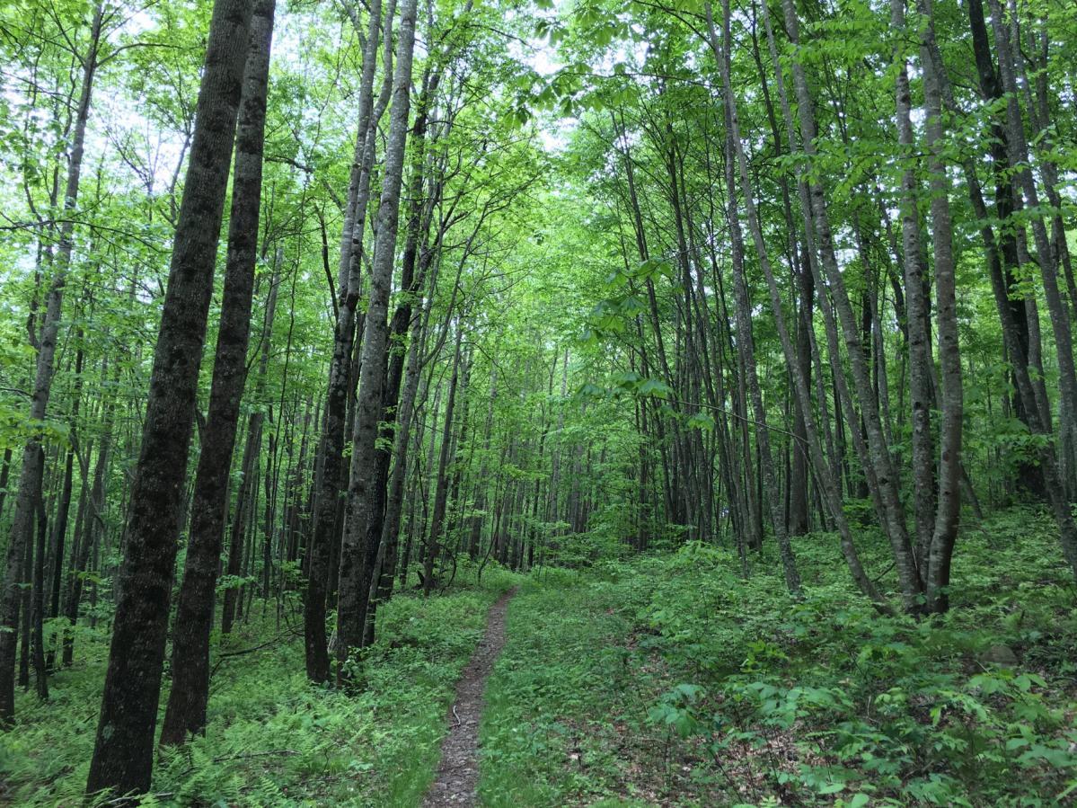 Cove Creek Trail / 340