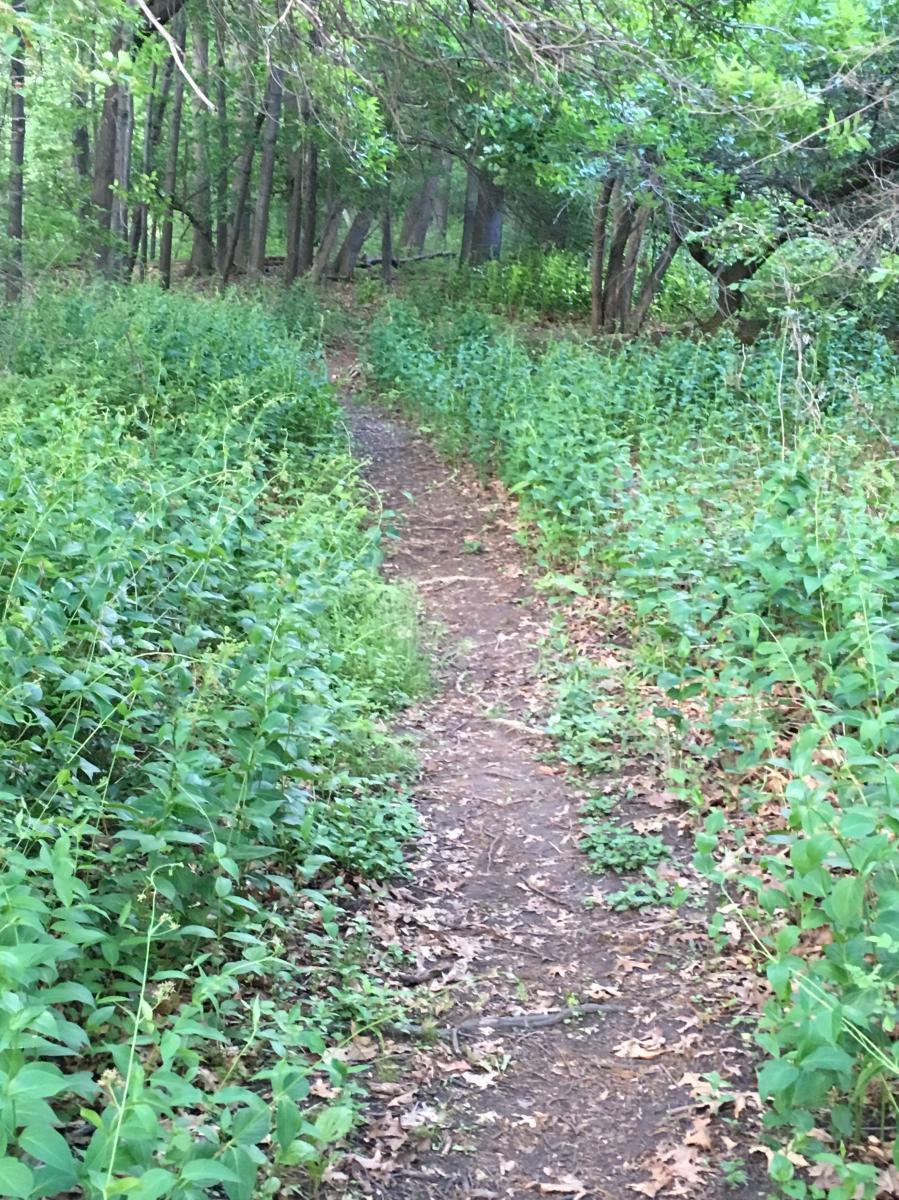 Seneca Park Trail