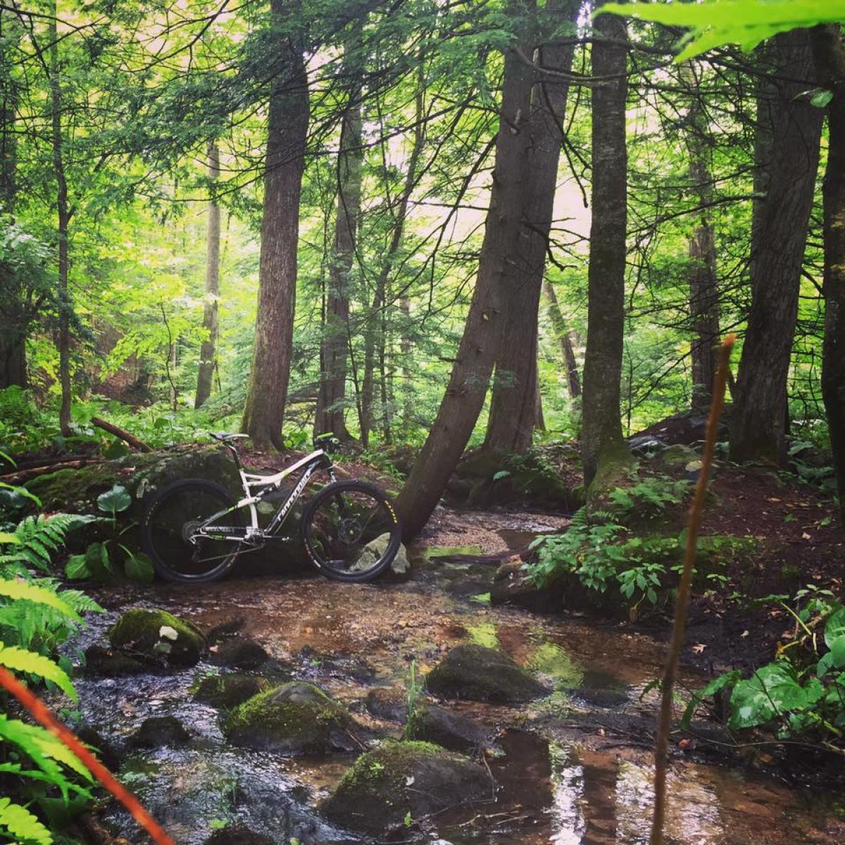 Nassahegan State Forest