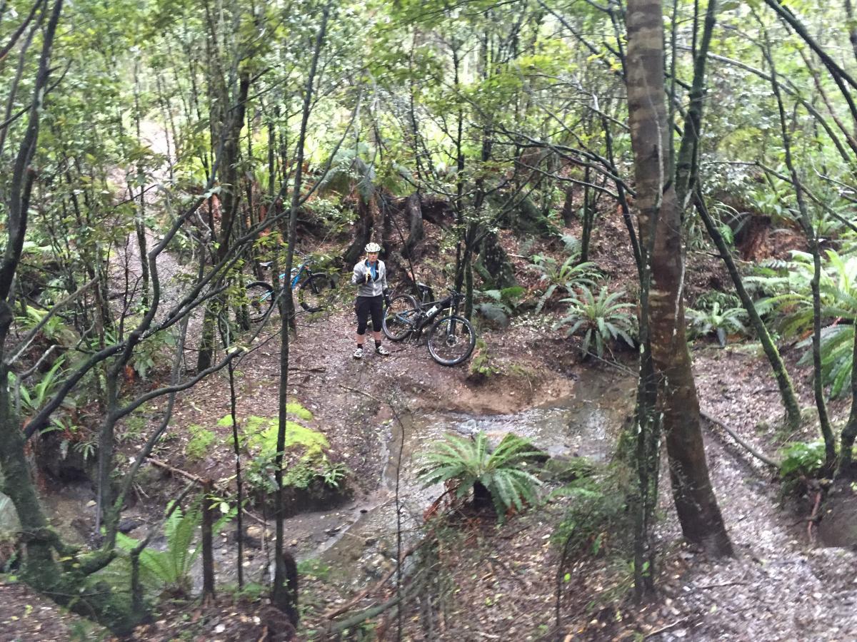 Tree Trunk Gorge