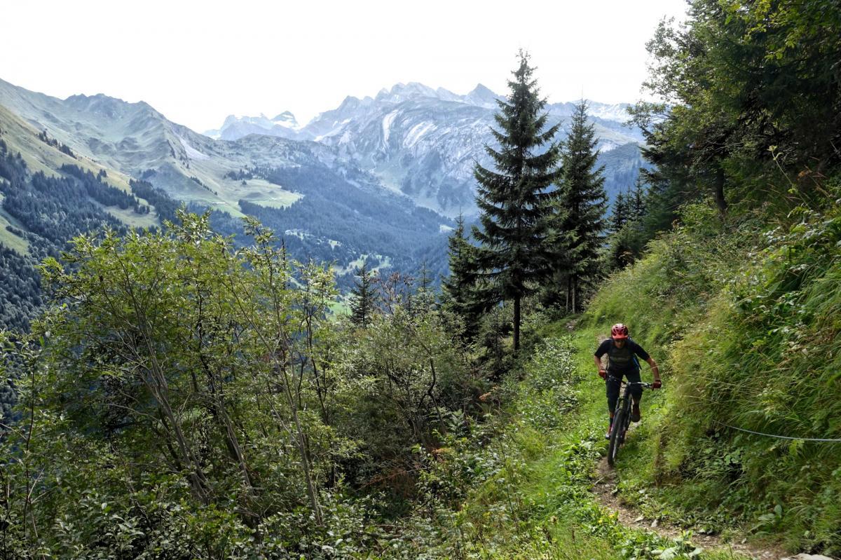 Pachorey Trail