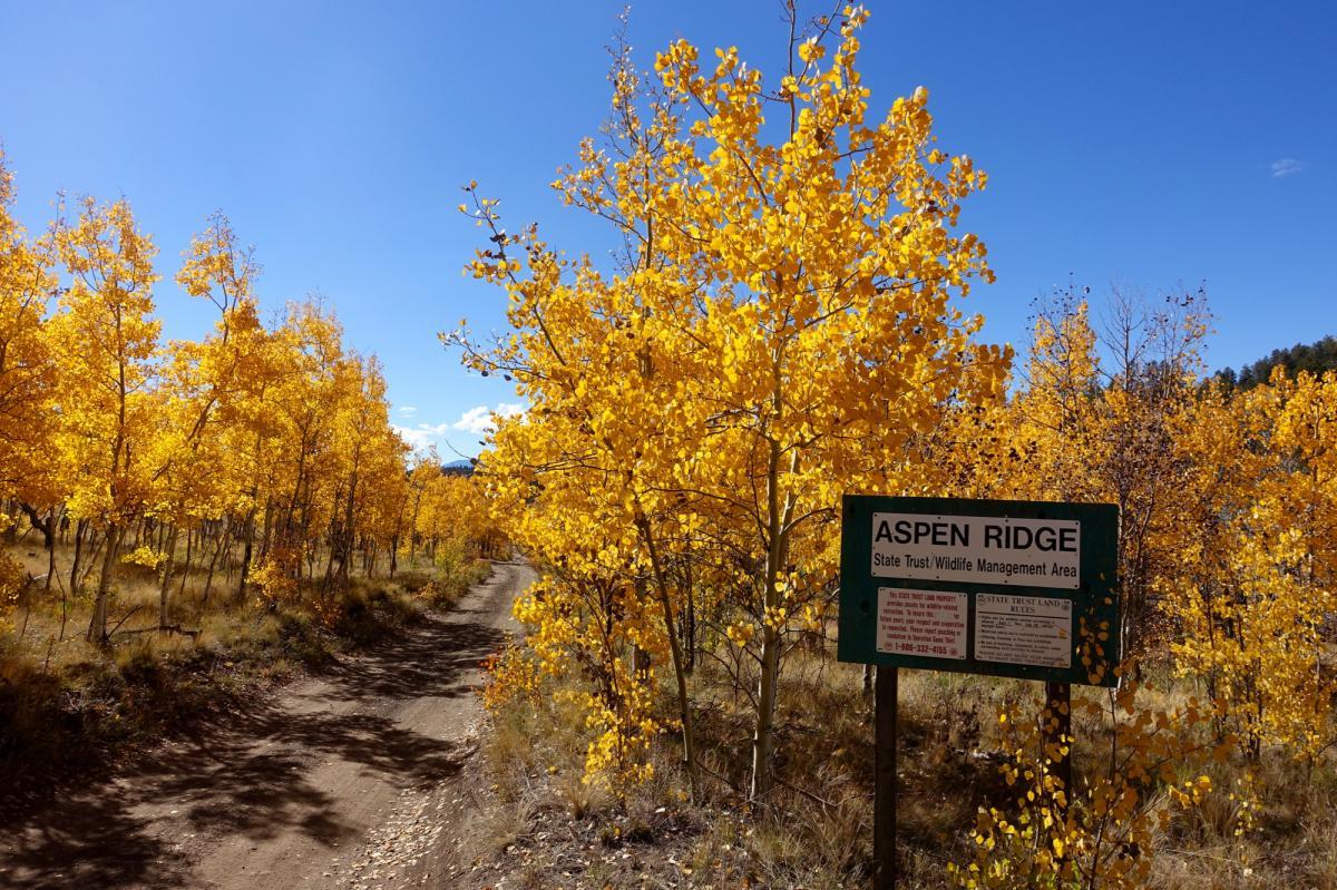 Aspen ridge road 185 photo singletracks com for Aspen ridge