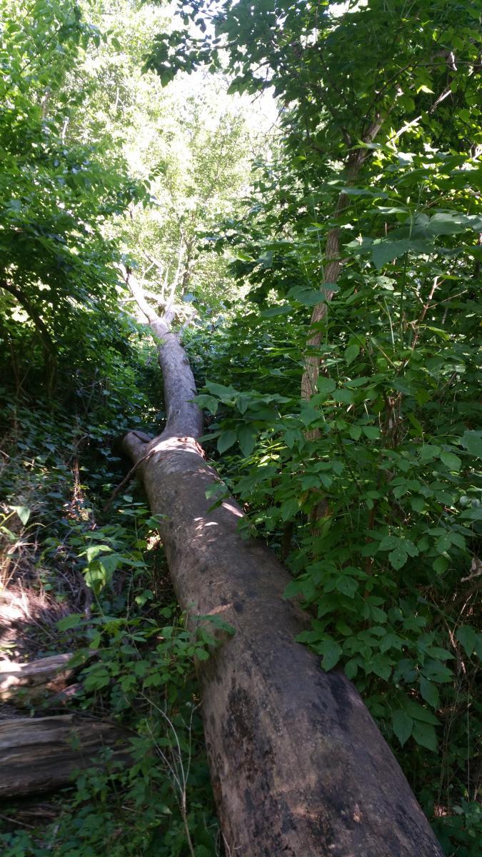 Waterfall-Loop / Center Cut Trail