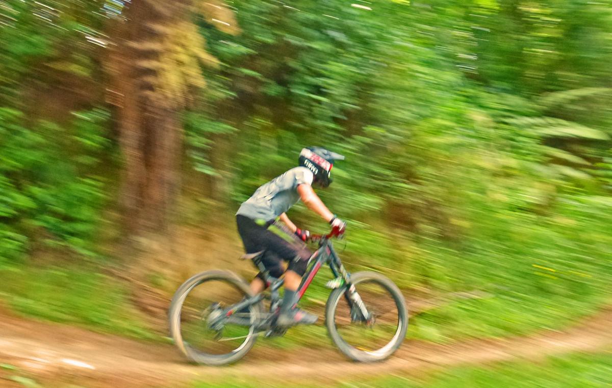 Oropi Grove mountain bike park