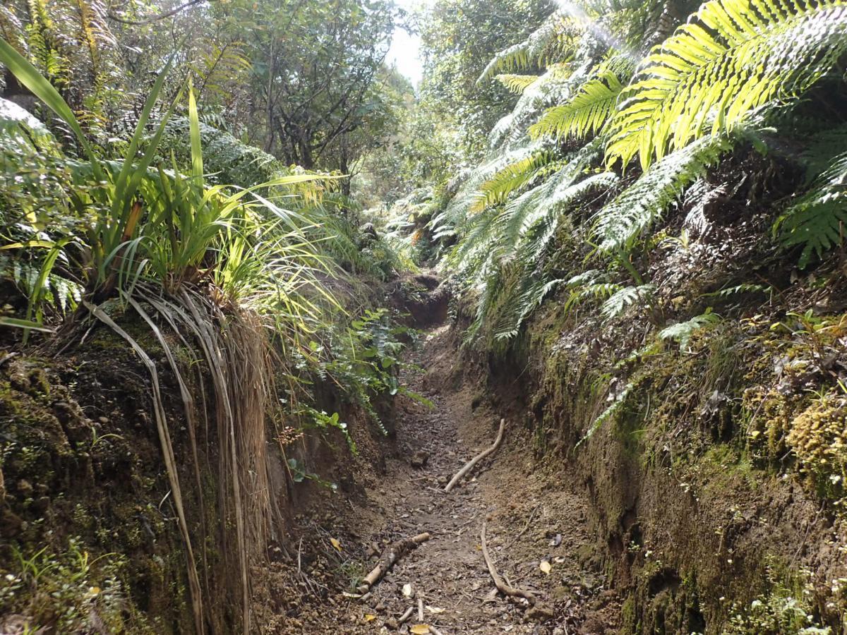 Waihaha Hut Track