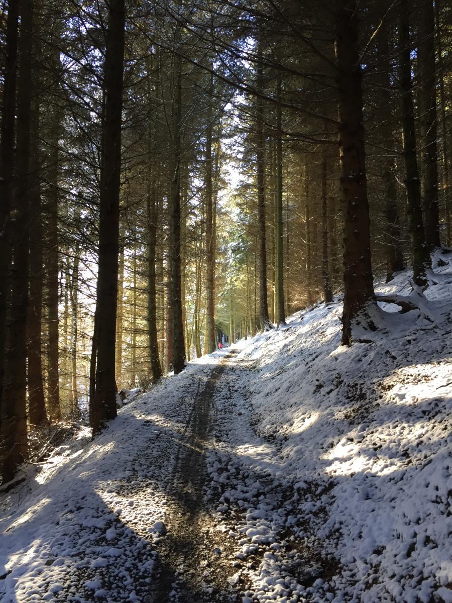Reviews for Glentress Mountain Bike Trail Centre - MoreDirt