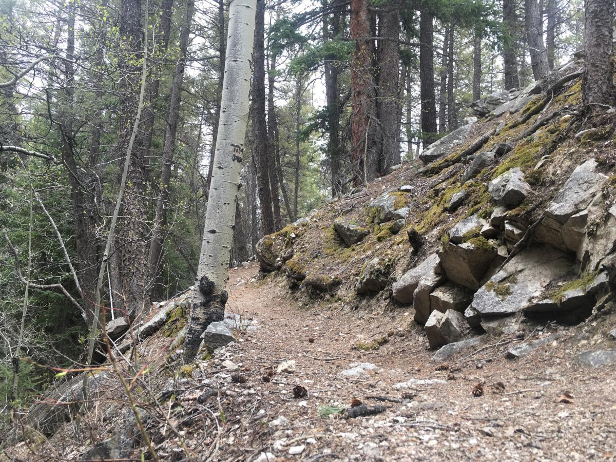 Colorado Trail: Mount Princeton to Avalanche Trailhead / Collegiate Peaks Wilderness