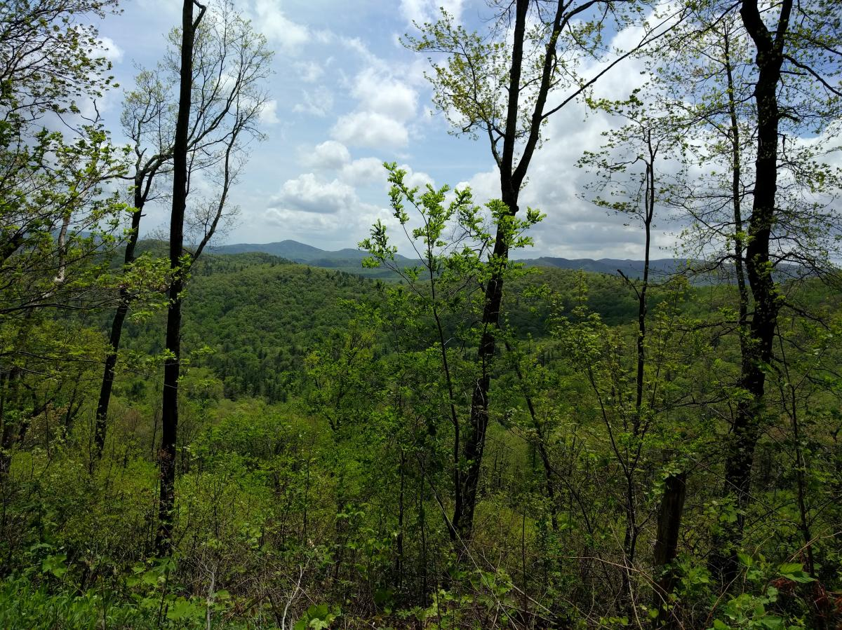 Yancey Ridge