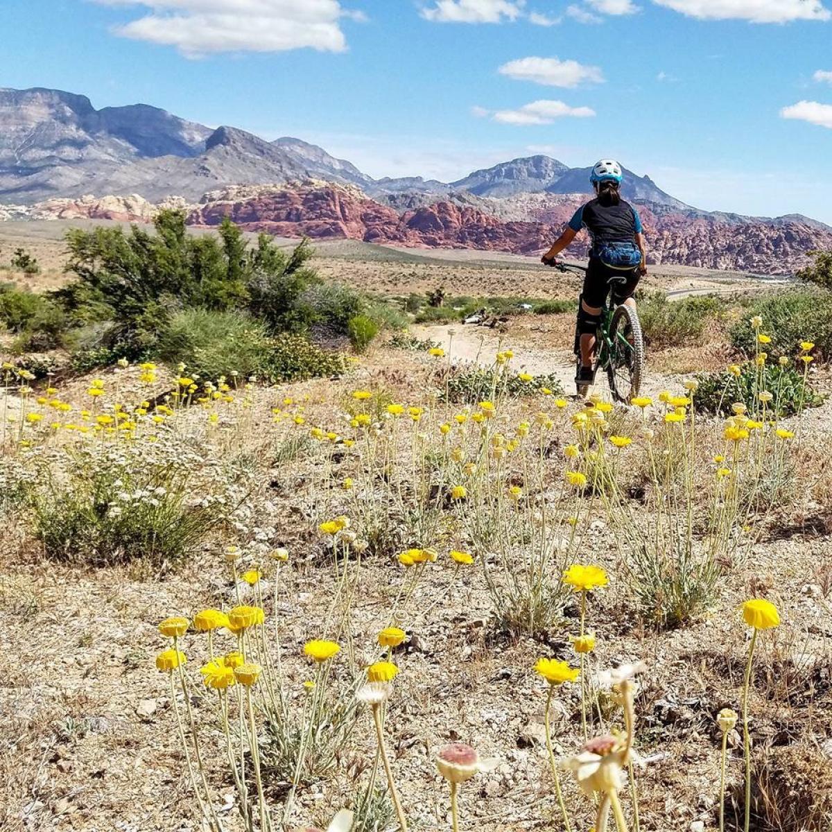 Cowboy Trails