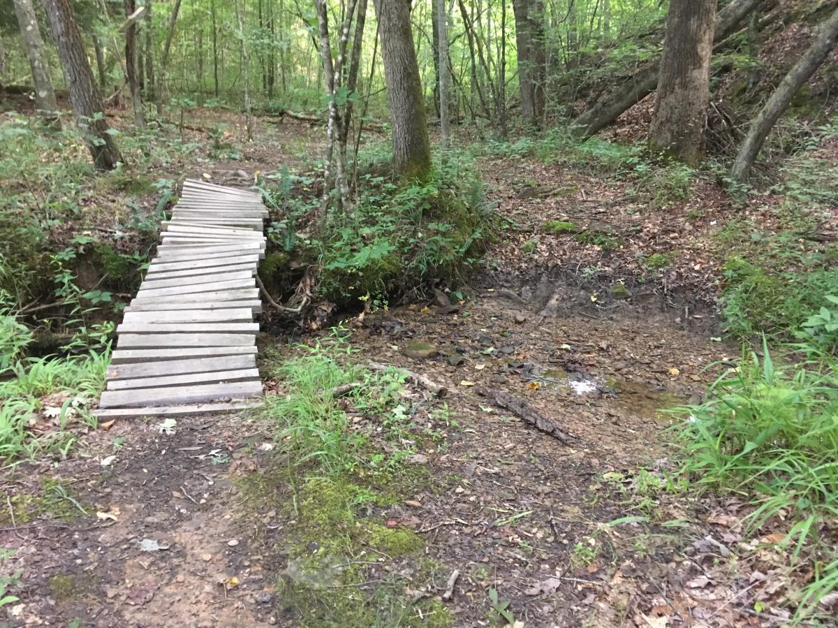 Lake Trail