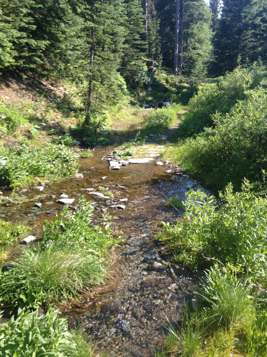 Sawmill Trail