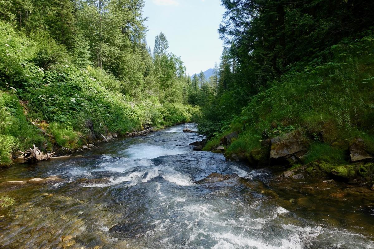 Fairy Creek Waterfall