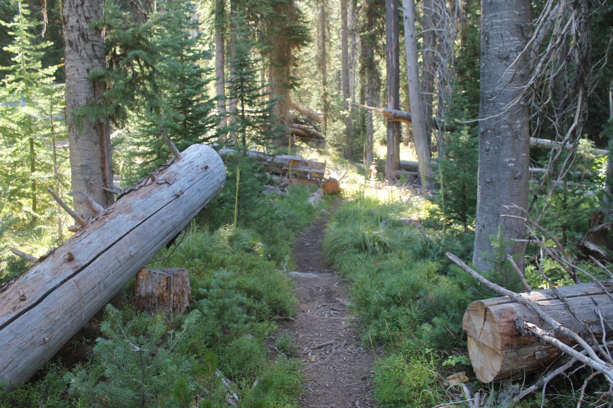 Twenty Mile Creek Trail