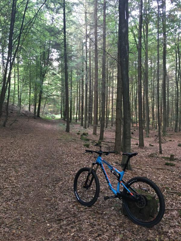Hohenecken Trails