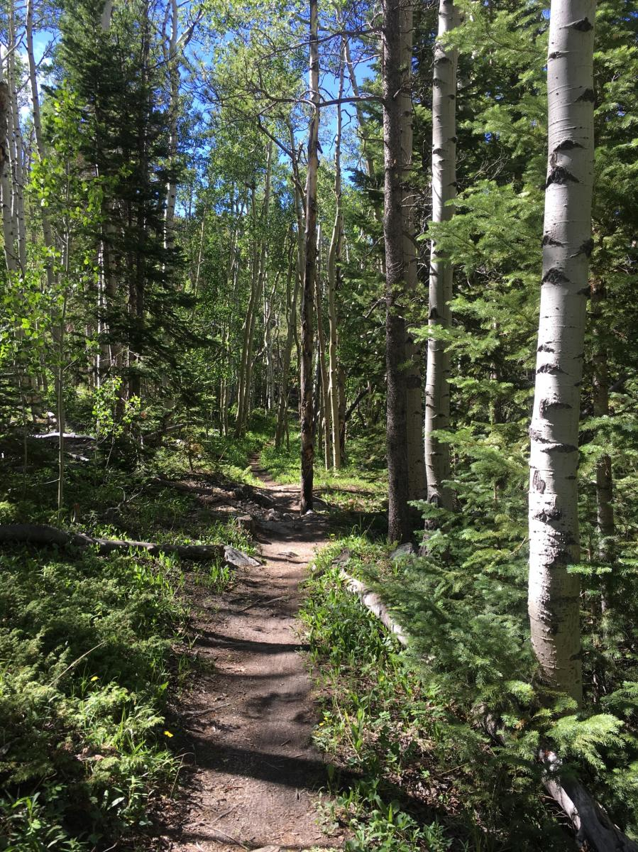 Colorado Trail: Mount Princeton to Avalanche Trailhead / Collegiate Peaks Wilderness