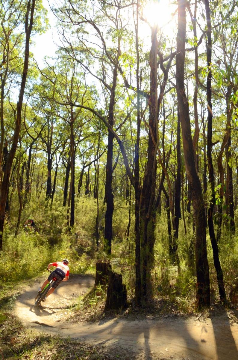 Forrest Mtb Trails