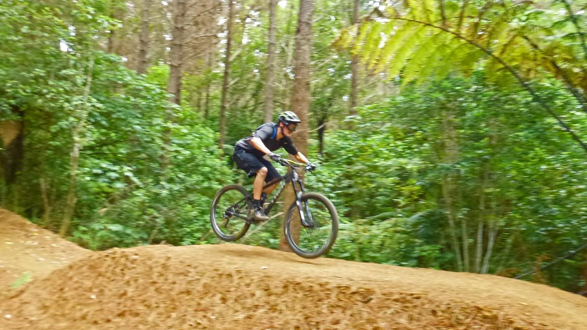 Pirongia Forest
