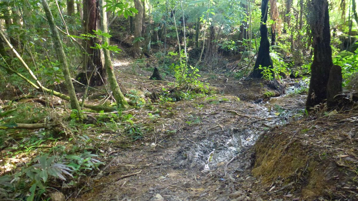 Glenbervie Forest Mountain Bike Park