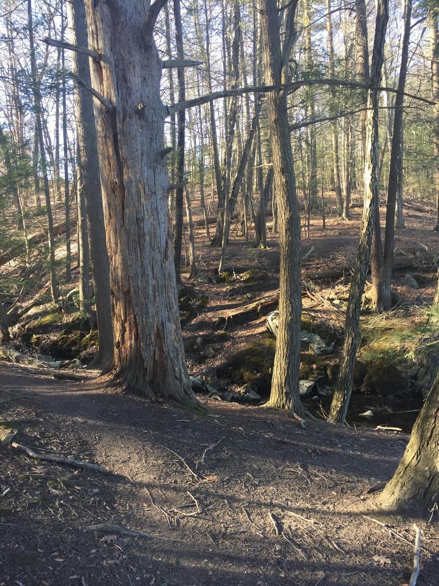 Merrimack River Trail
