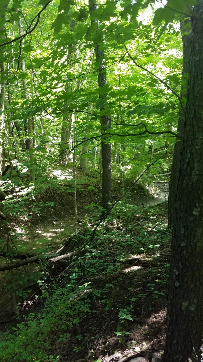 Andrew's University Trail