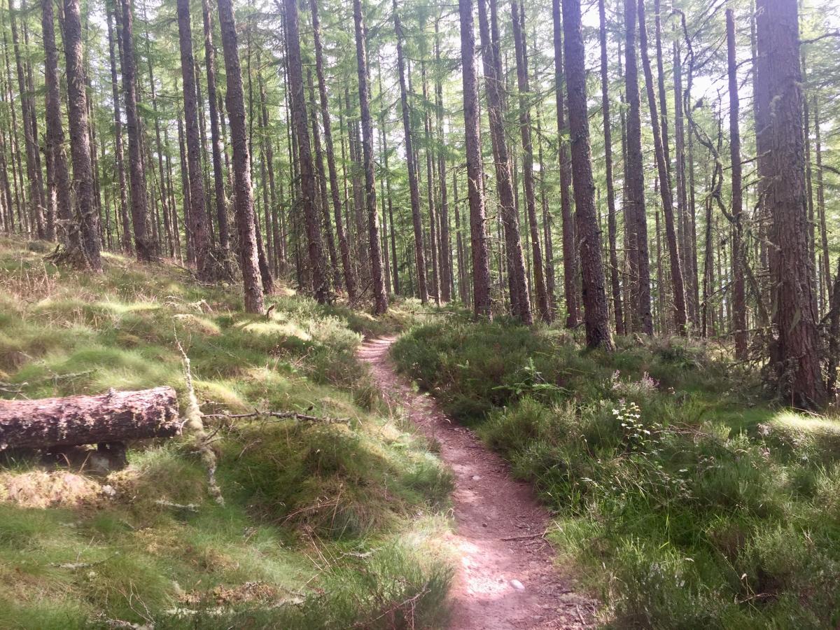 20219266541 Learnie Red Rocks Mountain Bike Trail in Rosemarkie, Scotland ...