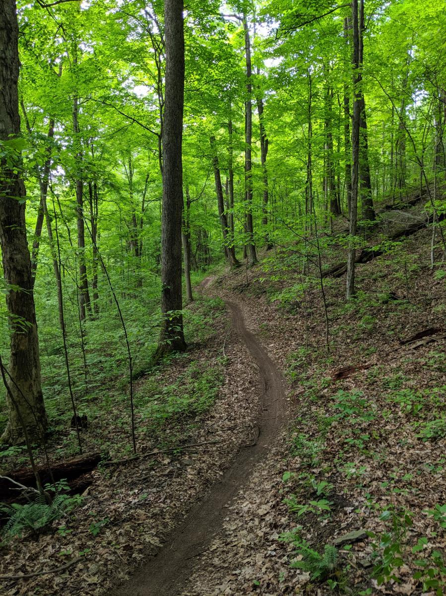 Allegrippis Trails