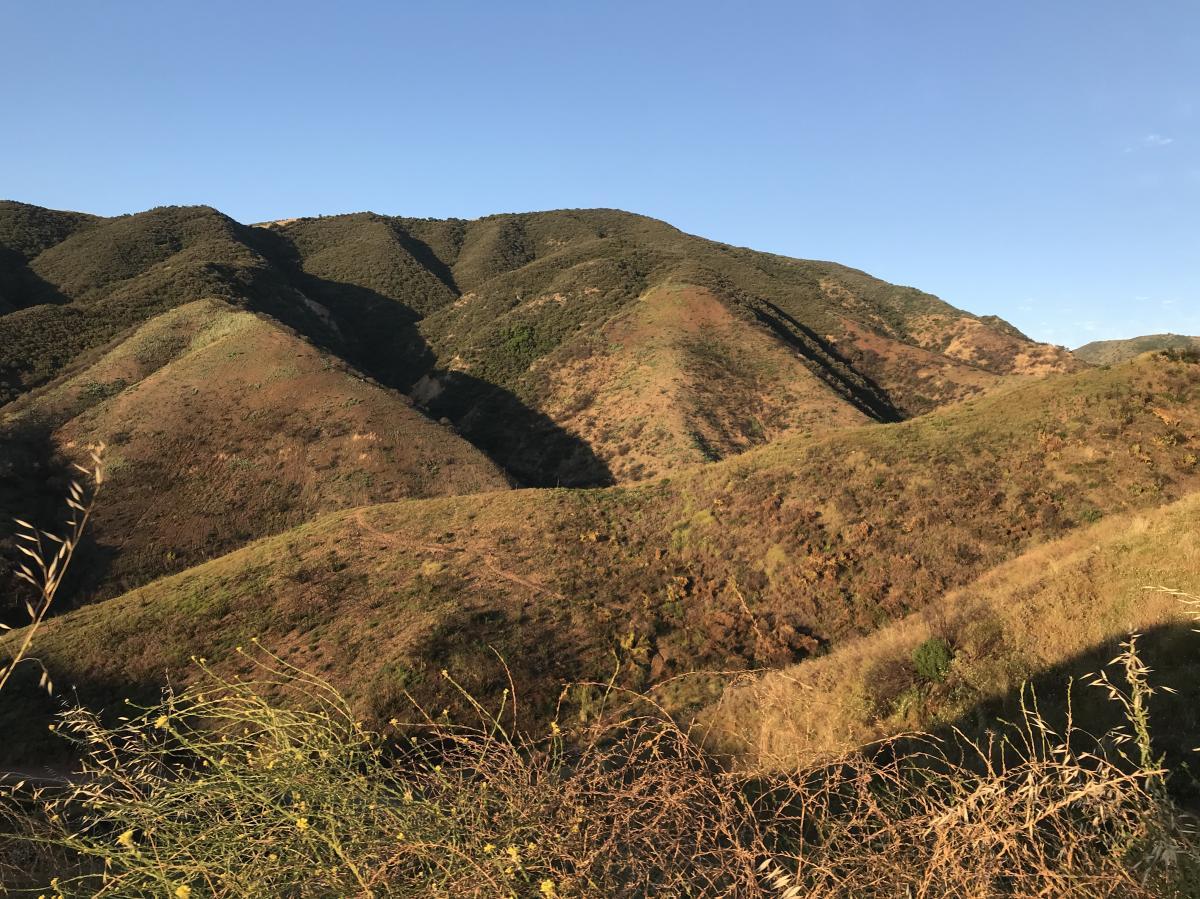 Skyline Drive trail