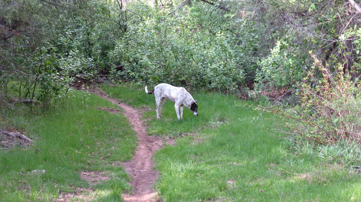 Quaking Aspen Trail