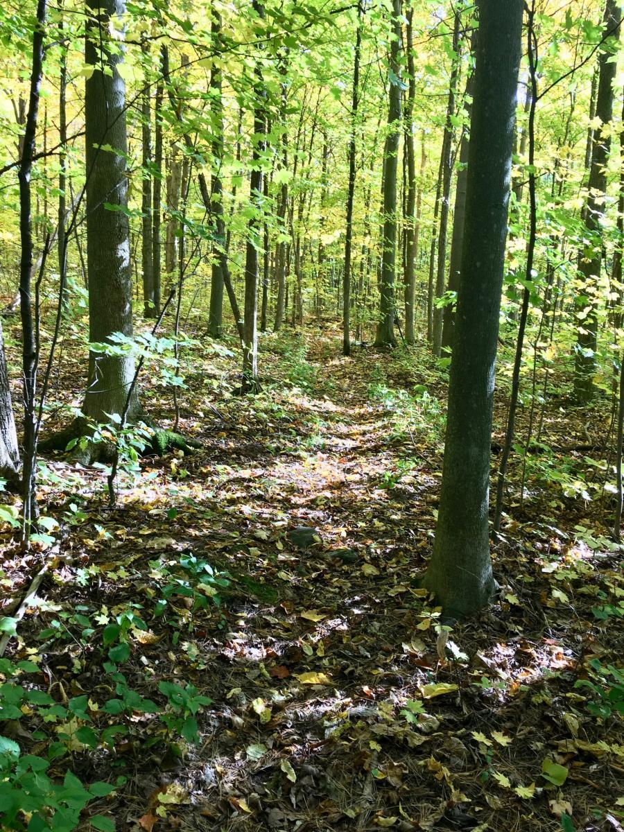 Charlottenburg Forest