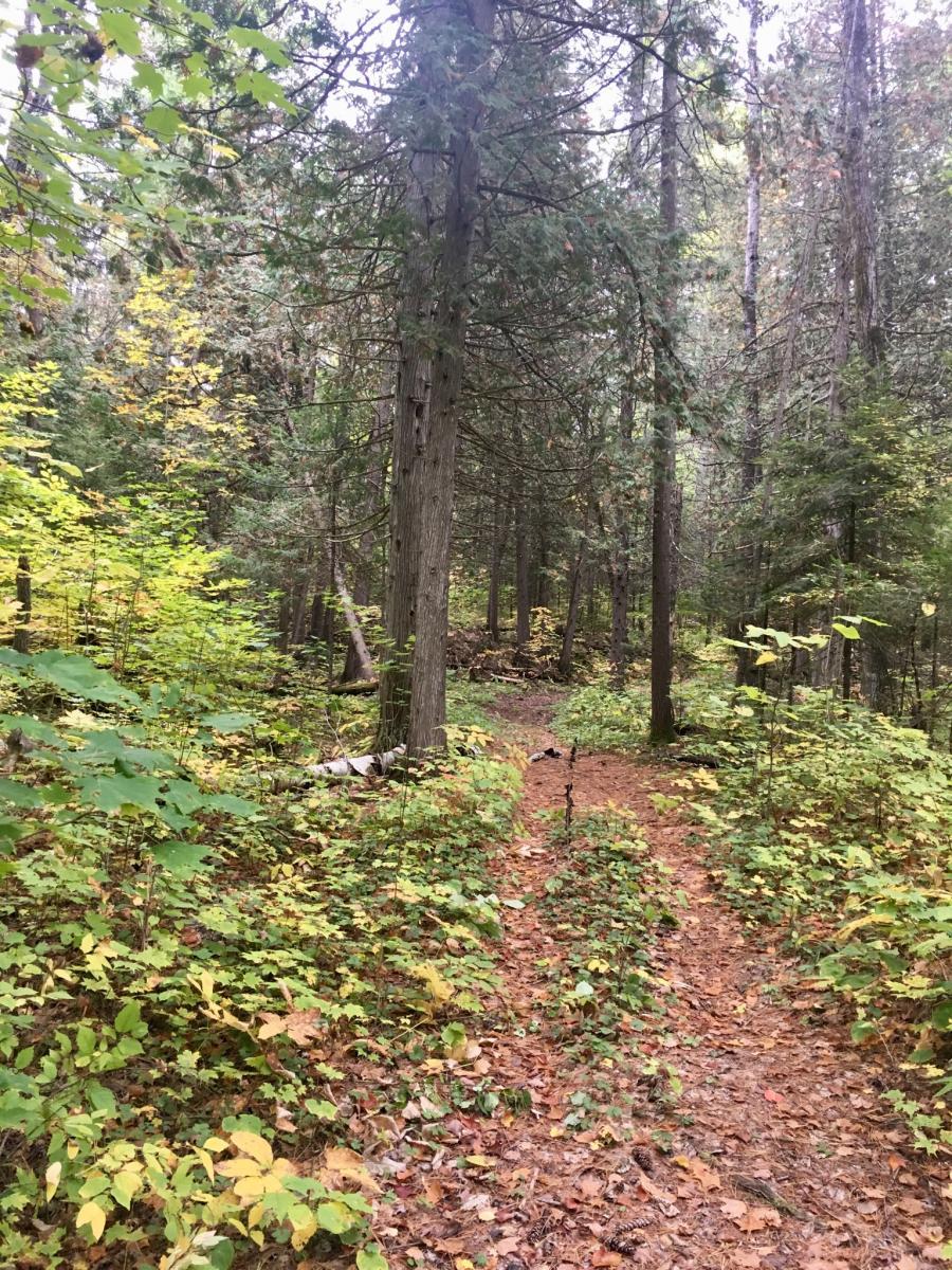 Madawasca Nordic Trail Center