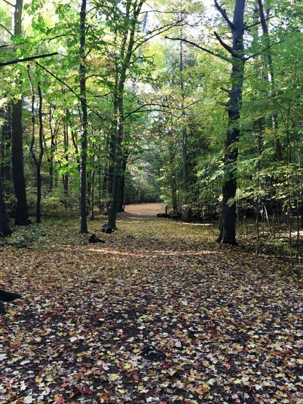 Trenton Escarpment