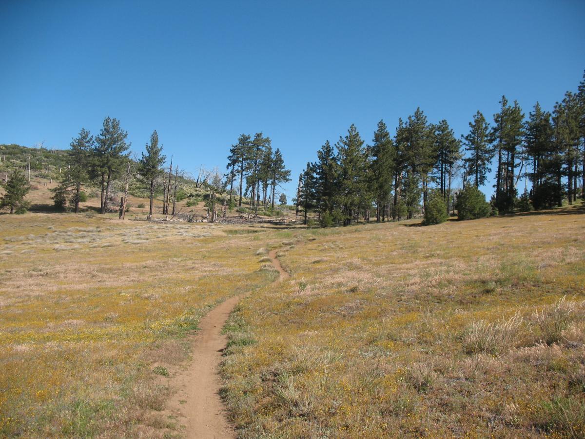Big Laguna Trail Mountain Bike Trail in Pine Valley ...