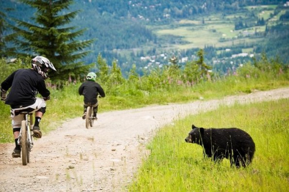 """Mountain bikers ride past a bear on Whistler Mountain."" British Columbia. Photo: Chad Chomlack."