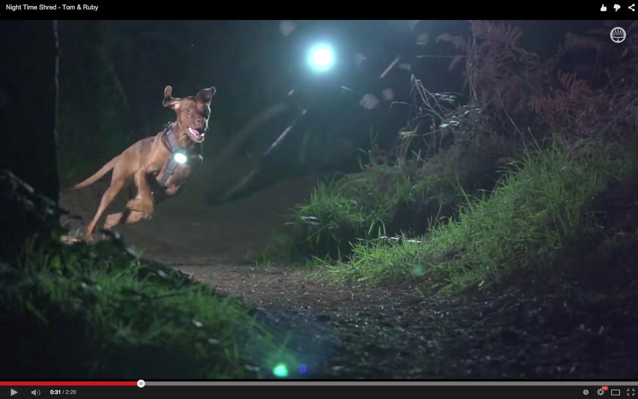 video  nighttime trail dog shred
