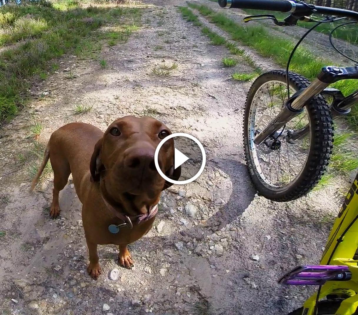 Trail Dog Video Gopro