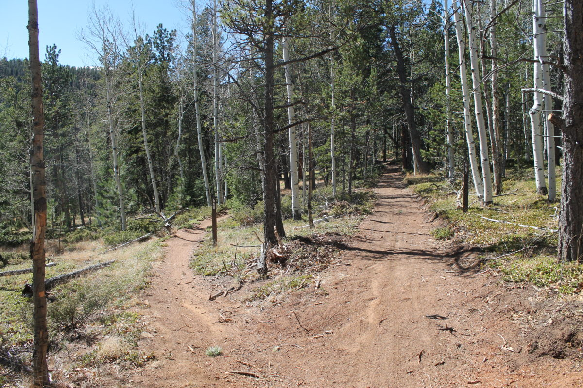This picture illustrates the difference between the new and the old.  On the left is the existing, narrow singletrack that flows through the woods; on the right is the new, wide path that plows straight through the forest.