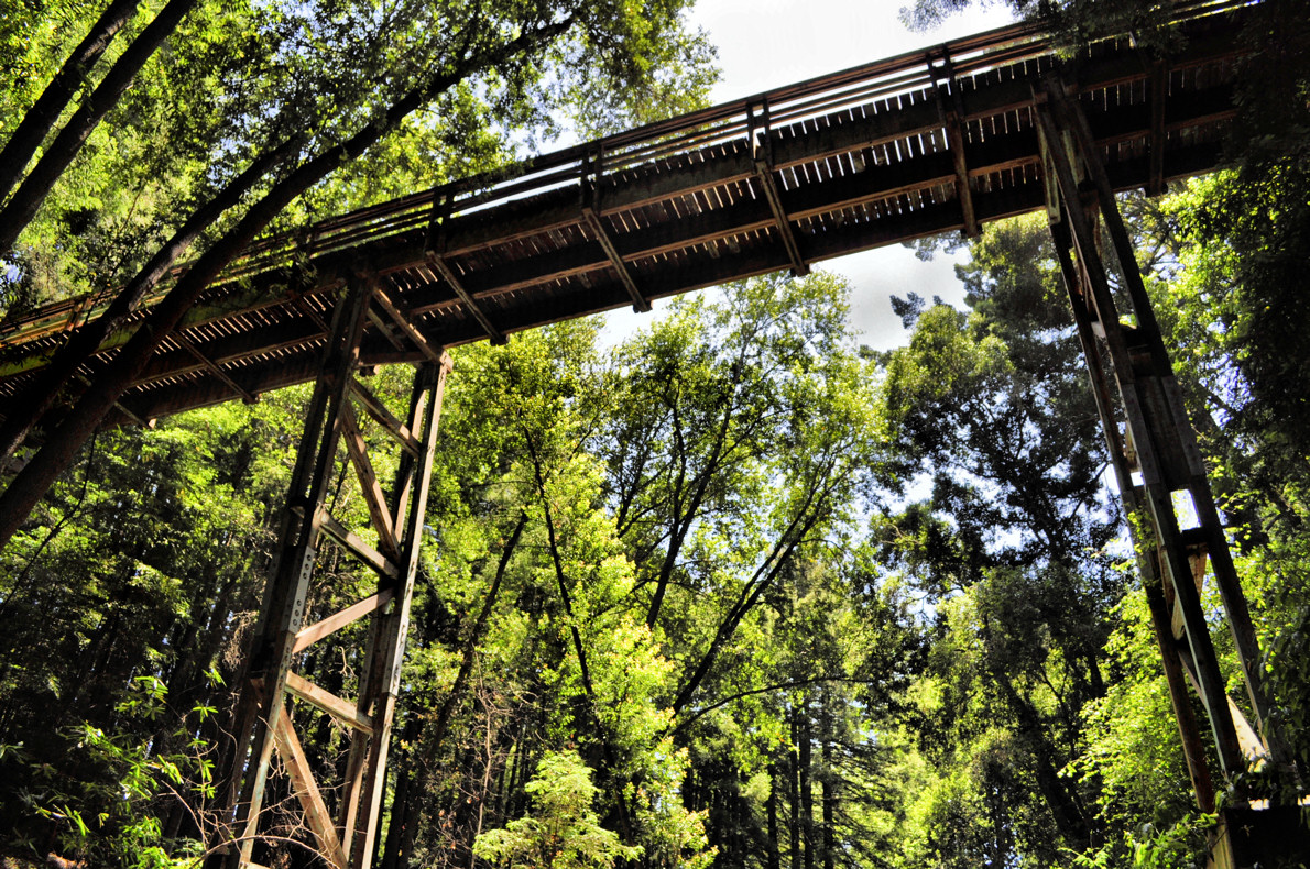 Or how about an elevated bridge through the redwood forest to get from your dorms to campus? Photo: ZeFlower, via Flickr Creative Commons https://www.flickr.com/photos/confusedmime/