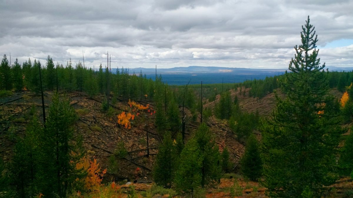 Burn from the 1988 Yellowstone Fire.