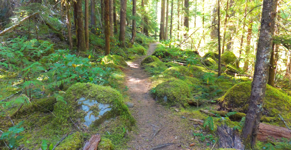 Part of the beautiful Umpqua River Trail (photo: cascadesingletrack.com)