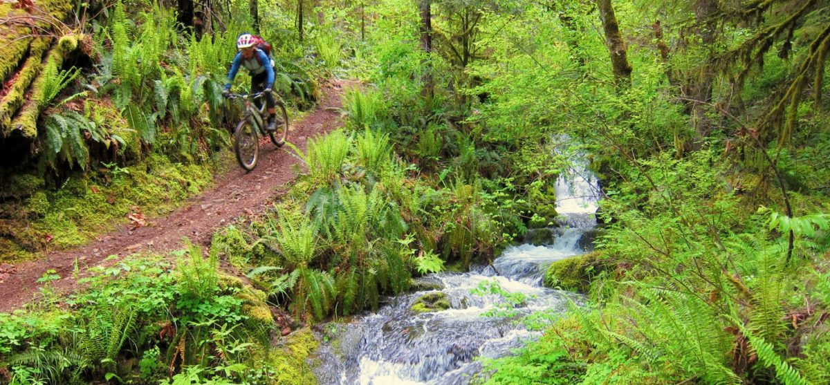 Among the 200+miles of mountain biking access that stand to be lost in the proposed Crater Lake Wilderness is a 15.6 mile stretch of the IMBA Epic North Umpqua Trail (photo: cogwilde.com)