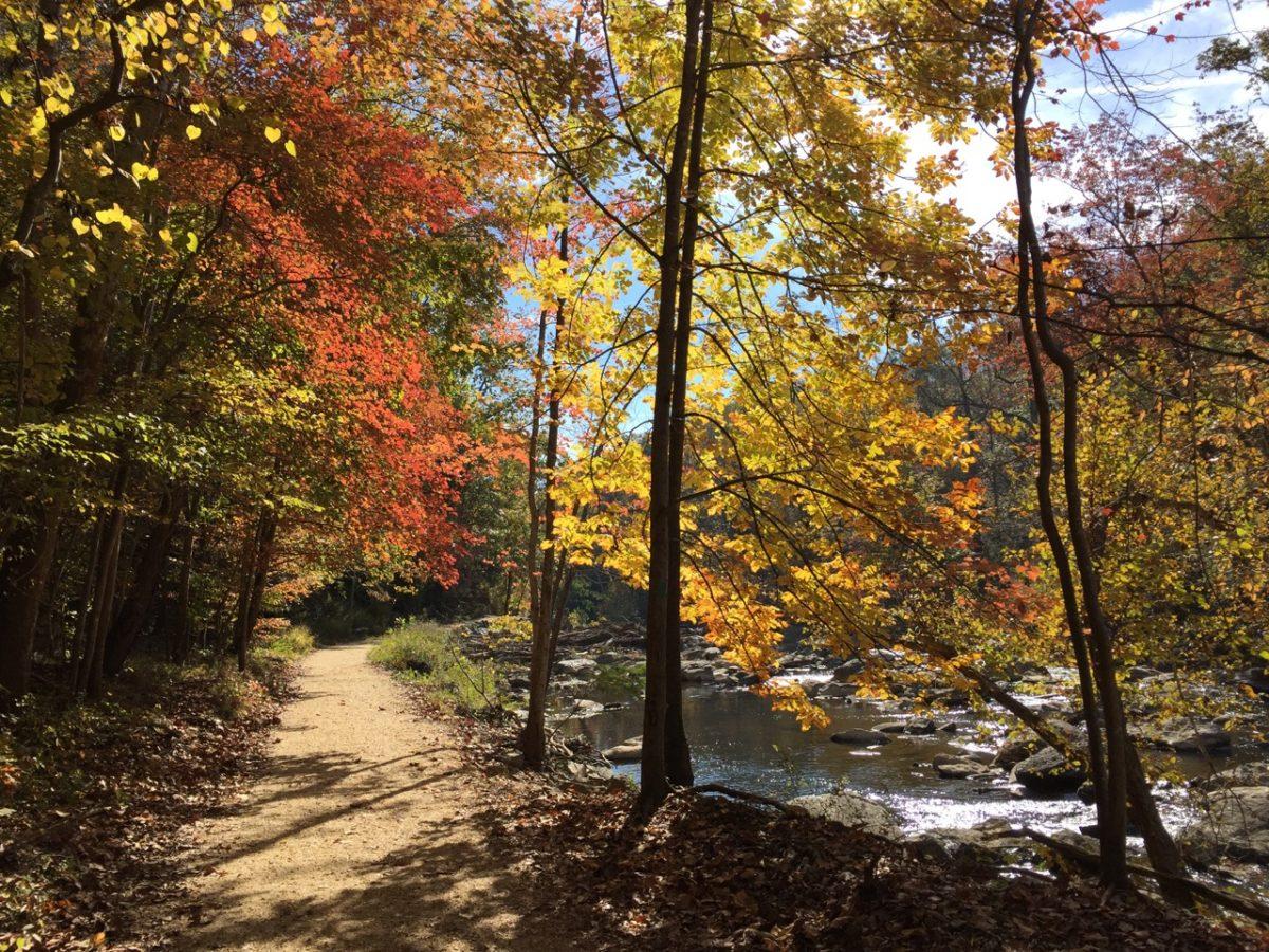 Autumn on the Difficult Run trail (photo: funinfairfax.com)