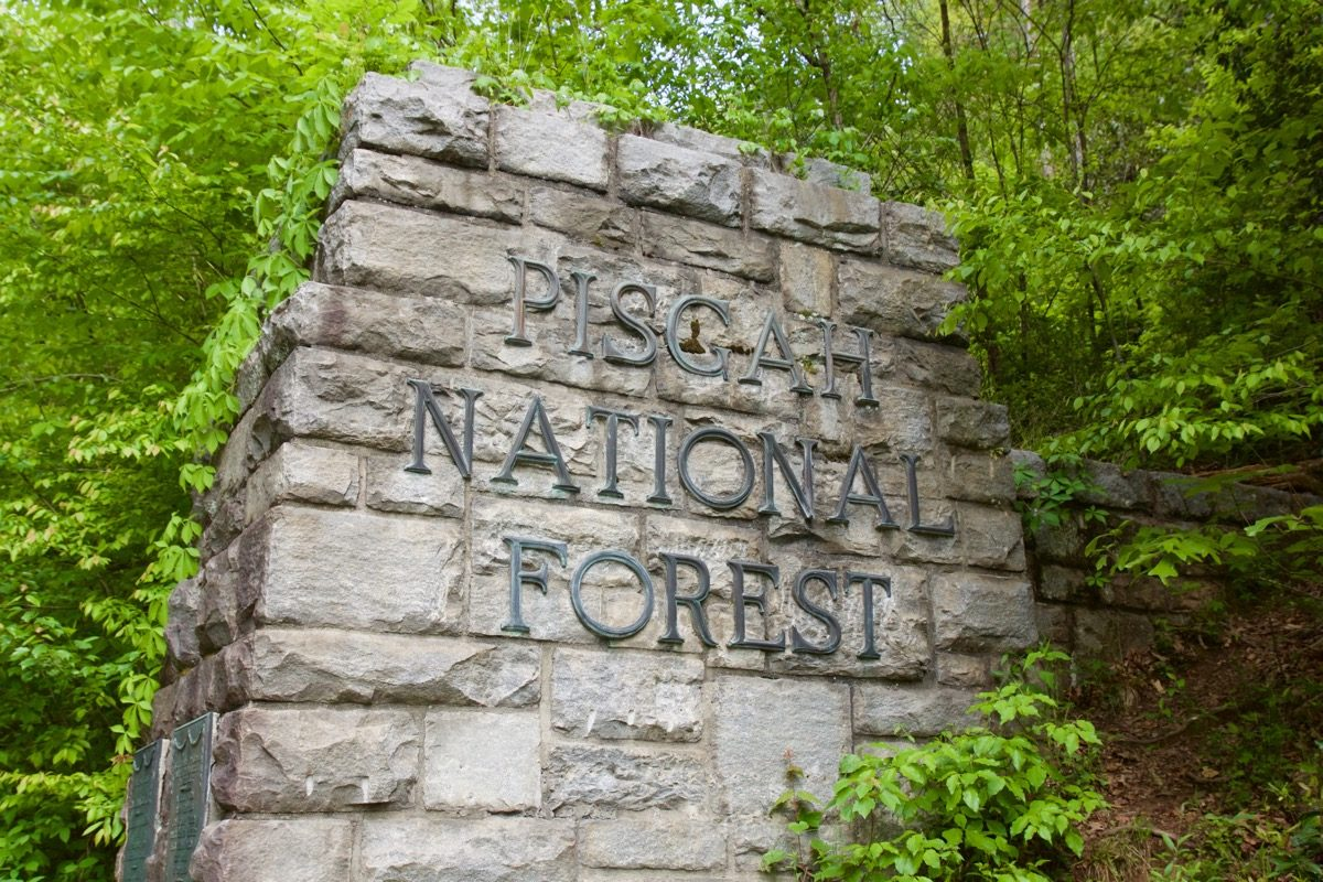 pisgah forest jewish singles Festivals & events  an annual five day single-track endurance event in september through pisgah national forest that covers 195 miles and.