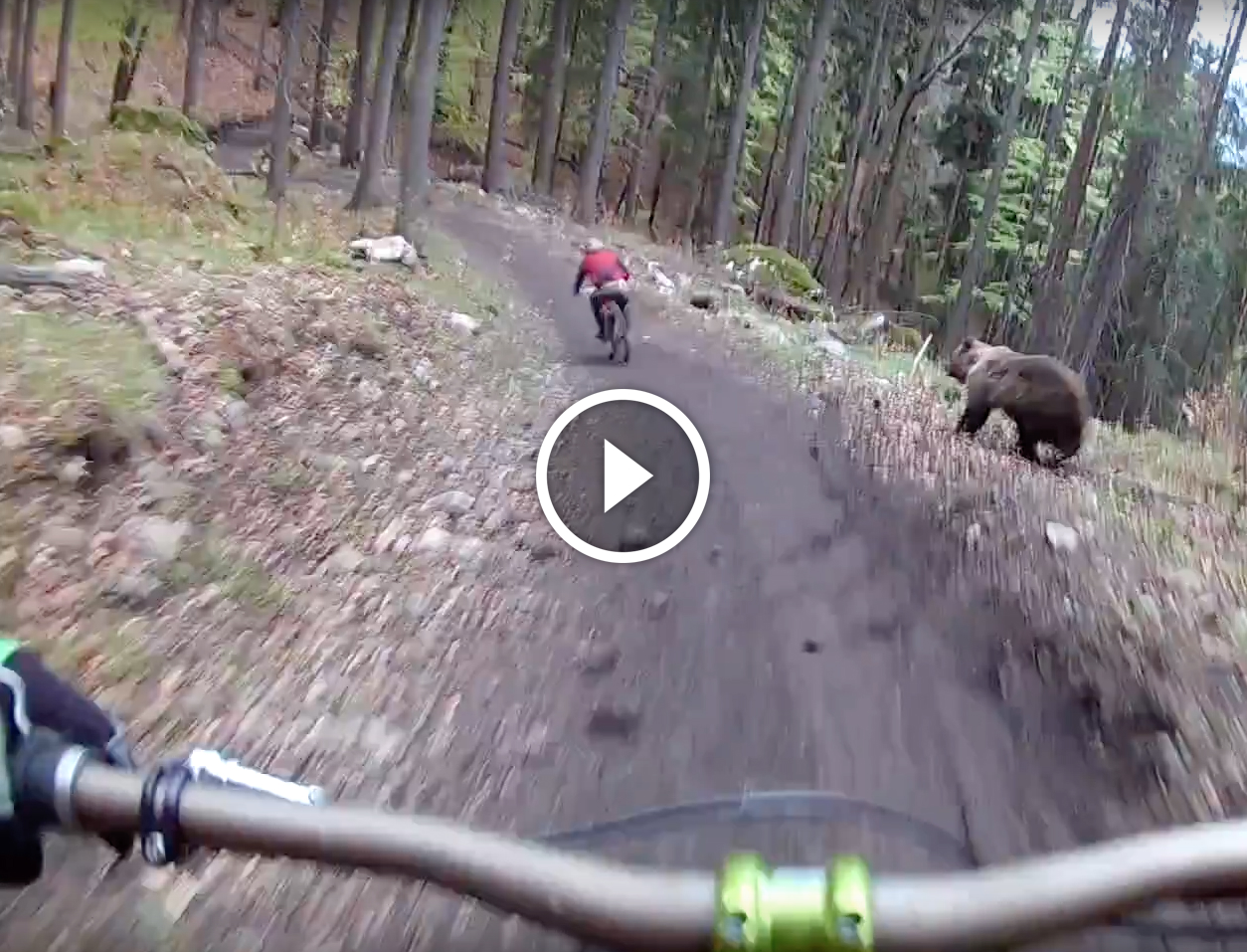 Watch Bear Charges Mountain Biker At Slovakian Bikepark