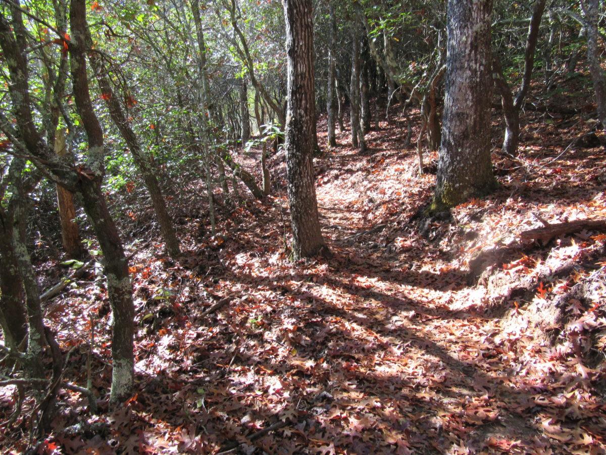 Can Kids Ride Tsali Trails