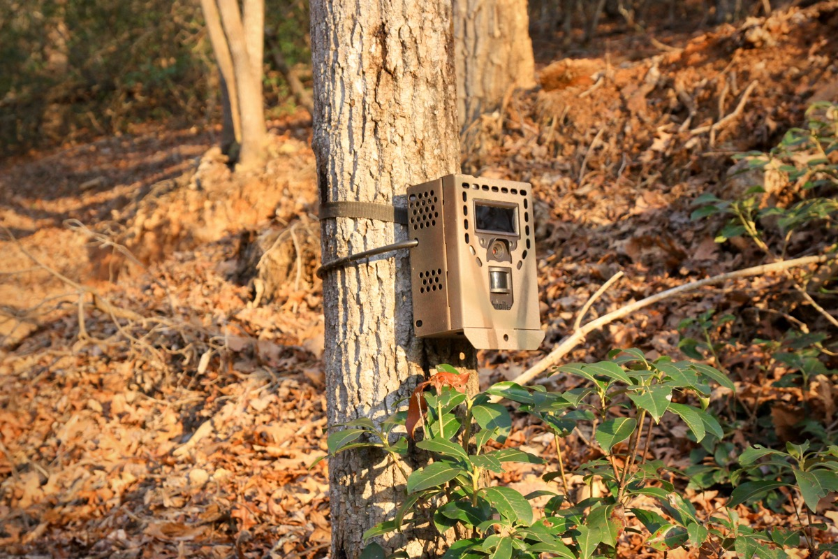 Game Cameras Are Being Used to Catch MTB Trail Poachers - Singletracks Mountain Bike News