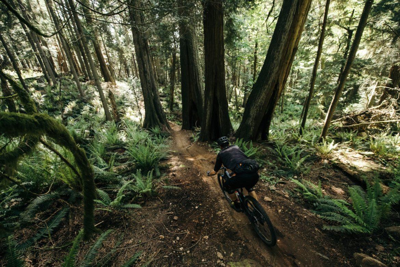 Mountain Biking Bellingham, Washington: Loamy, Steep, and Beautiful - Singletracks Mountain Bike News