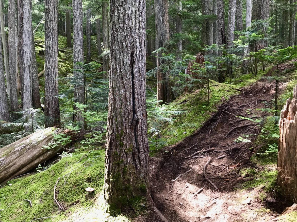 A Morning on the Microclimate Mountain Bike Trail in Whistler - Singletracks Mountain Bike News