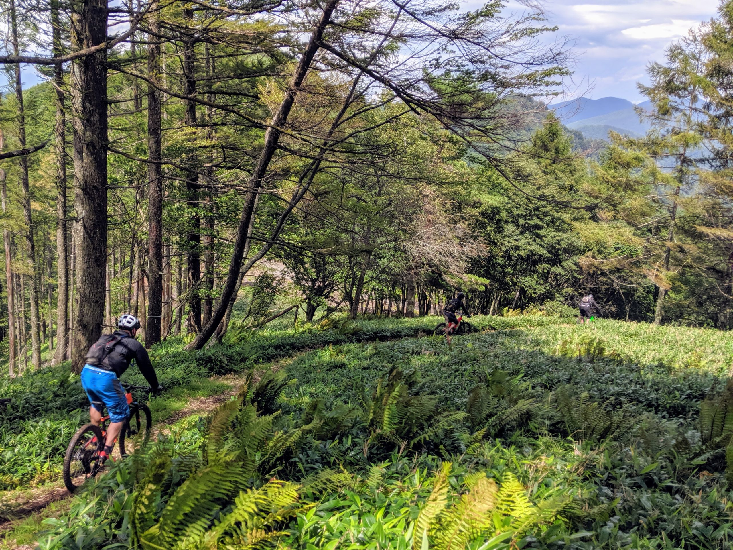 13 Days Exploring Japan's Mountain Bike Trails and Cuisine - Singletracks Mountain Bike News